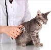 Ветеринарные клиники в Демидове